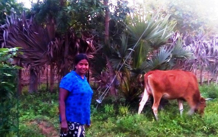 Sri with her Co-operatives cow in the Northern Province